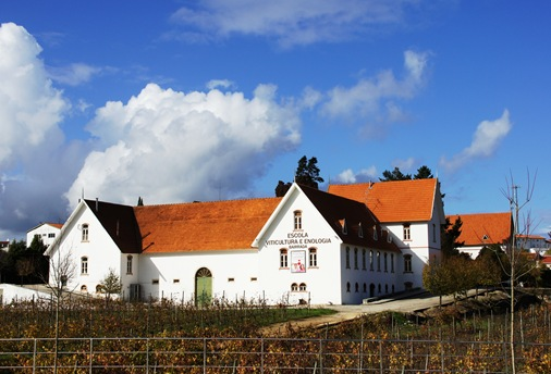 anadia - escola de viticultura e enologia