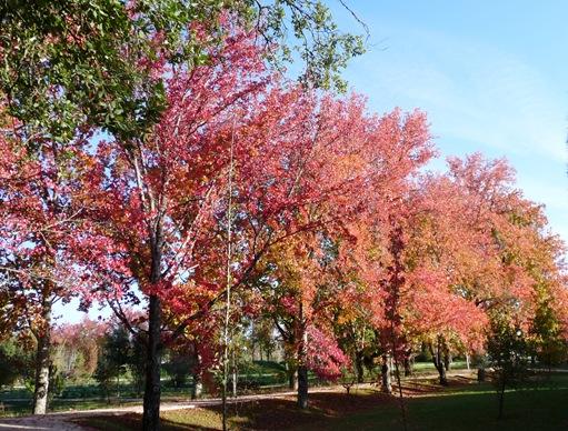 33. Parque municipal - mealhada
