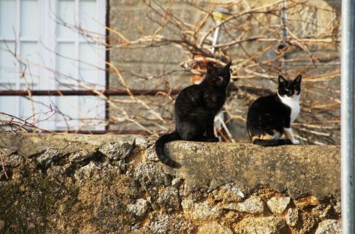 Alpedrinha - os gatos