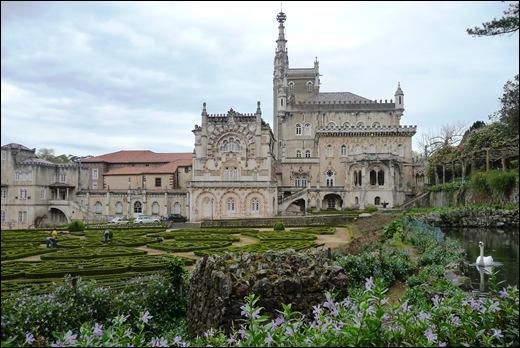 Buçaco - jardim do palácio - cisne 1