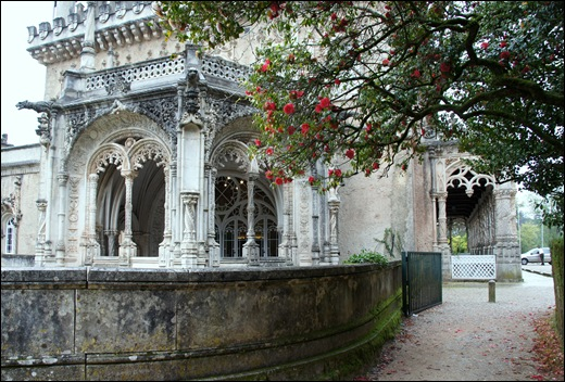 Buçaco - jardim do palácio - camélia vermelha