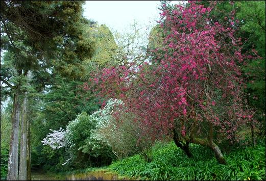 Buçaco - jardim do palácio 7