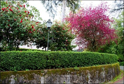 Buçaco - jardim do palácio 1