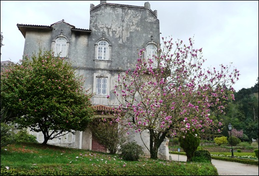 Buçaco - jardim do palácio - camélia - magnolia
