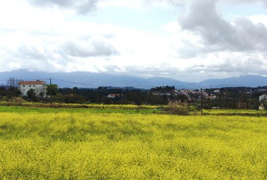 covilhã - campo de flores 1