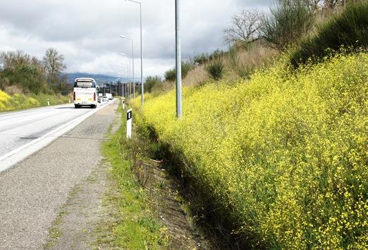 flores do campo a beira da estrada