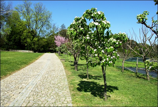jardim serralves - marmeleiros
