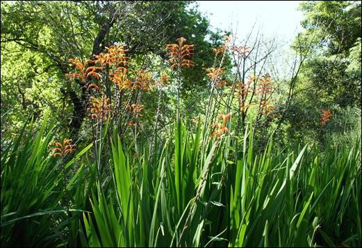 jardim serralves - flores