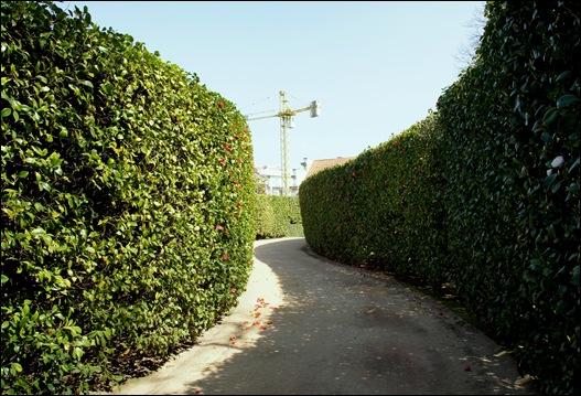jardim serralves  - parede de camélias