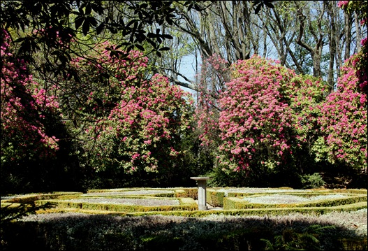 jardim serralves  - rododendron 3