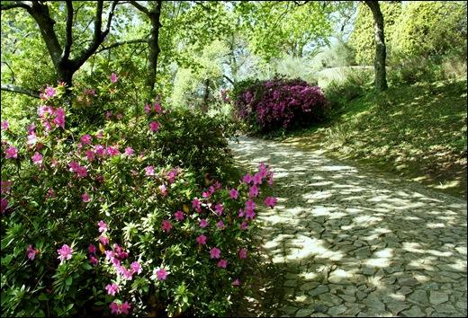 jardim serralves  - caminho com azaléias