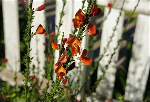 quintal jardim gloria : quintal jardim gloria:Portugal – Flores do meu quintal – Portomar – Mira – Parte 2