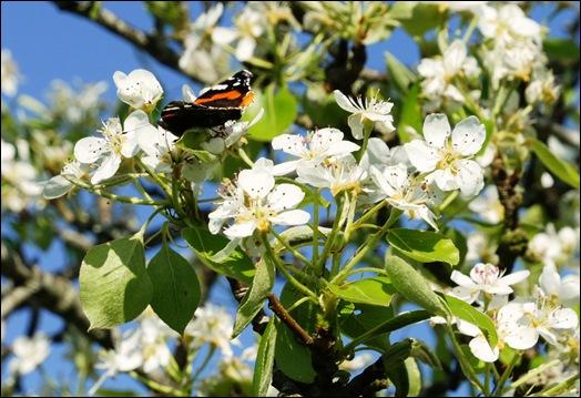 flor - pera 2 - Glória Ishizaka