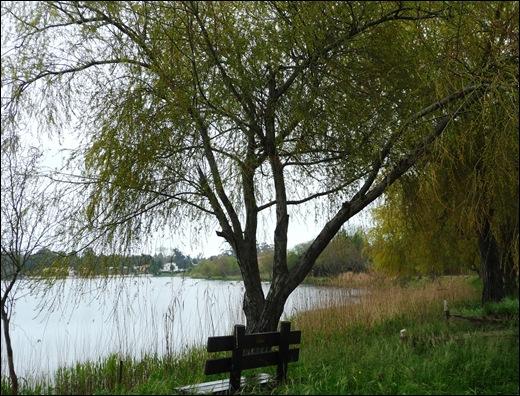 Mira - Lagoa - banco