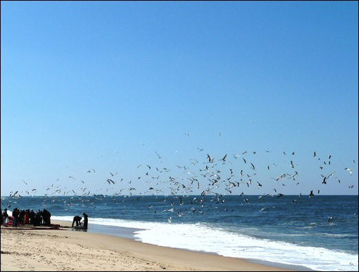 Praia de Mira - pesca 2