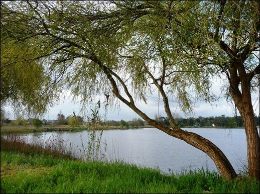 Mira - Lagoa