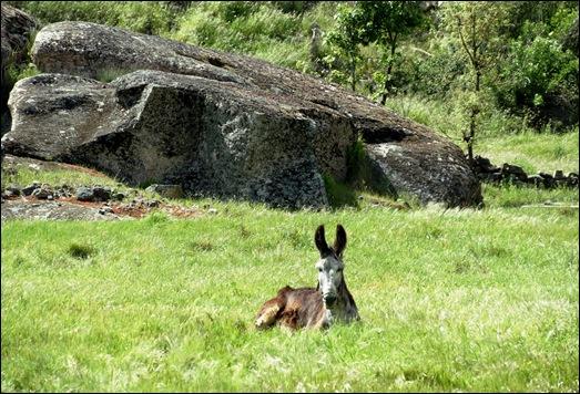 Glória Ishizaka - Vila do Touro - Uma pausa para descanso do burrinho