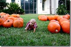 Pumpkin Patch 118 photoshop