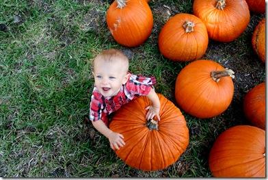 Pumpkin Patch 143 photoshop