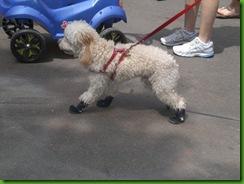 Dog de tênis!!