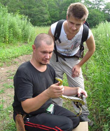 Un beau serpent de l'Oussouri (non venimeux). Photo : Yuri Bereznhoi