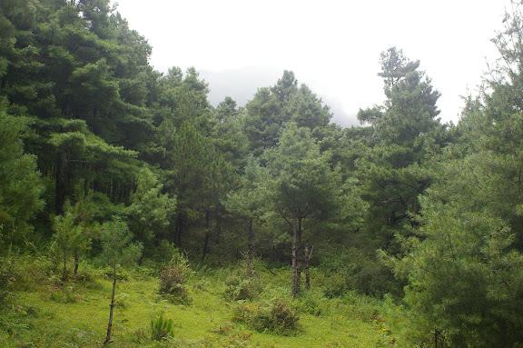 La forêt au-dessus de Yulong (2700 m). 21 août 2010. Photo : J.-M. Gayman