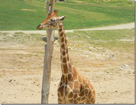 wildlife park 083