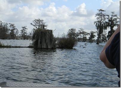 swamp tour 068
