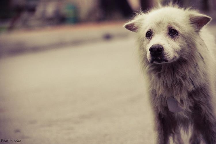 Pets-0449