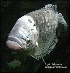 100114fish