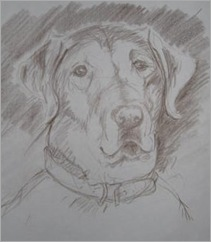 090904labrador_retriever