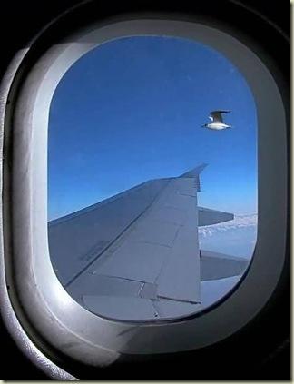 avion-fenetre-oiseau