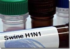 Swine H1N1