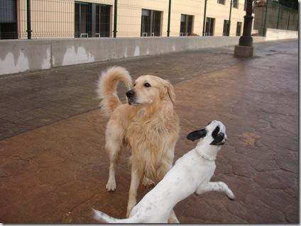 Otto y Pepe