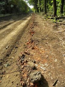 Вдоль всей просеки сняли слой грунта около 70 см толщиной, обнажилась ровная линия старого кирпича, видимо, граница чего-то в прошлом.