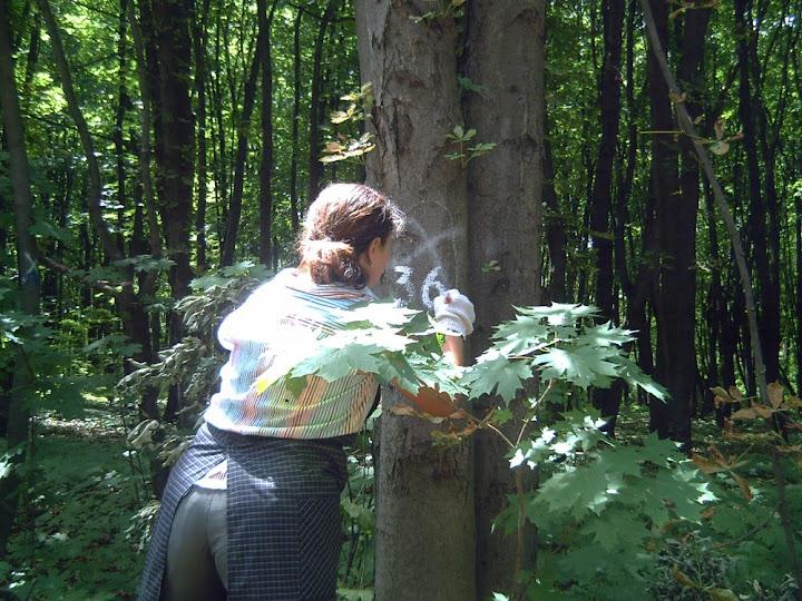 Нумерація дерев