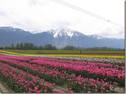 Tulip Festival 048