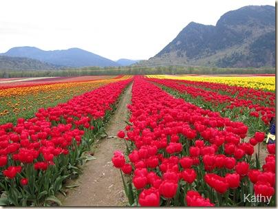 Tulip Festival 026