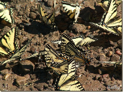 7mButterflies