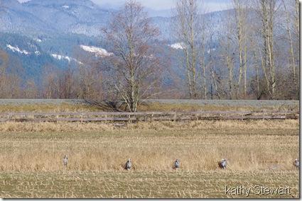 closer look at the Herons