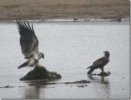 eagle dispute