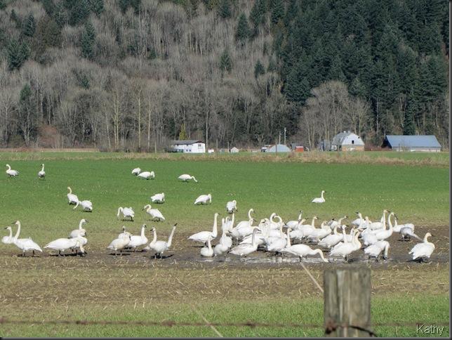 Swan's on Nicomen
