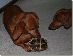 Apollo and turtle