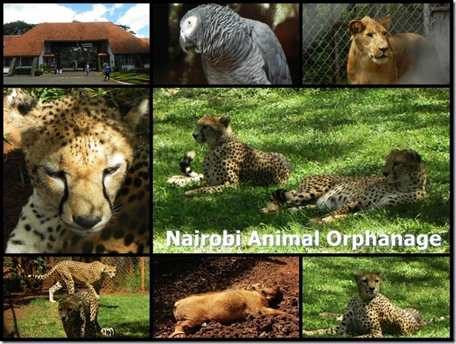 Nairobi_Animal_Orphanage_2