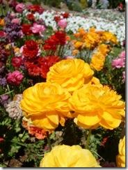 Flower Carnival 00004