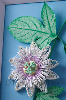 Quilled passionflower, closeup