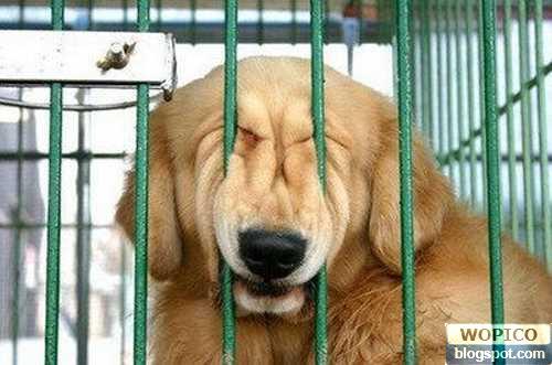 Squeezing Dog