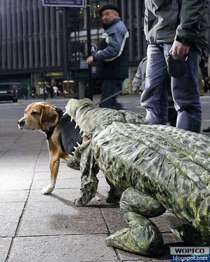 Eaten By Crocodile