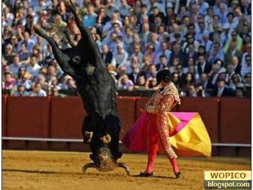 Stupid Bull