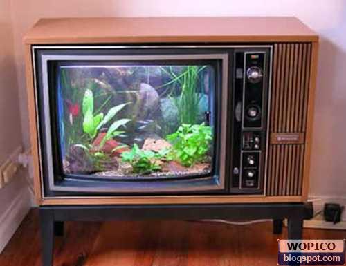 TV Aquarium